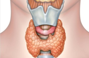 anatomy-thyroid-gland-digital-illustration-94266935