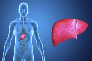 Liver-vital-organ-of-the-digestive-system-300x200
